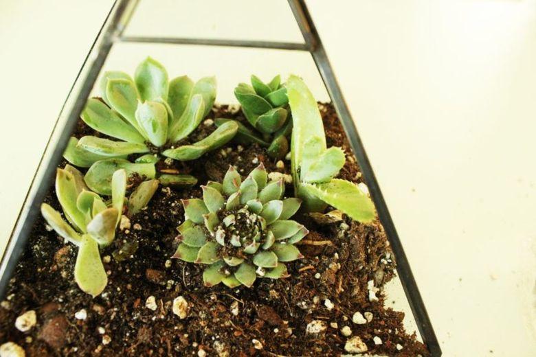 добавьте другие растения