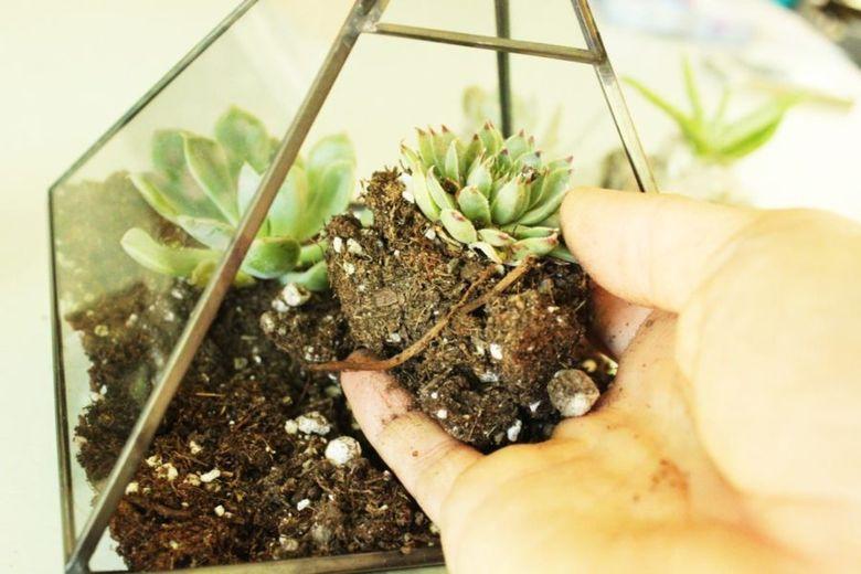 посадите растение